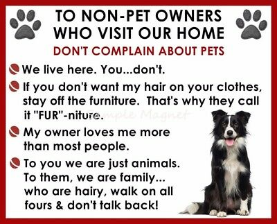 BORDER COLLIE House Rules for Non Pet Owners Funny Fridge Magnet