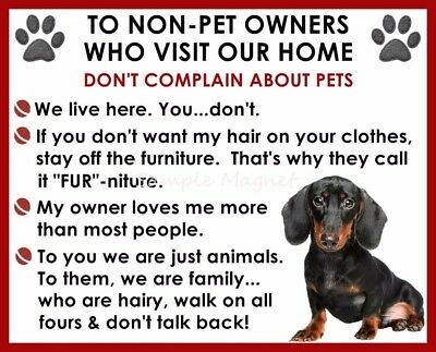 DACHSHUND House Rules for Non Pet Owners Funny Fridge Magnet