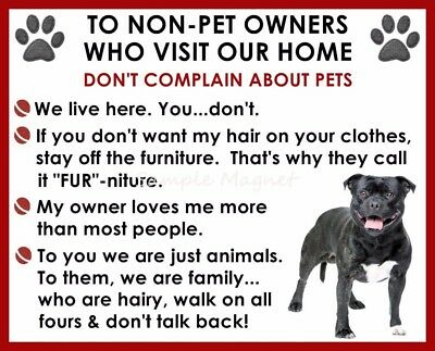STAFFORDSHIRE BULL TERRIER House Rules for Non Pet Owners Funny Fridge Magnet