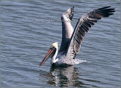 Photo: INCREDIBLE PELICAN SERIES: 'All Systems Go2': Louisiana Bayou, 2009