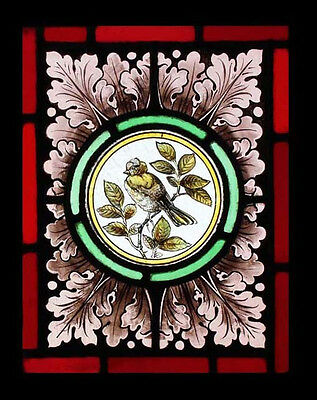 Stunning Rare Painted Bird Antique English Stained Glass Window