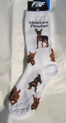 4Bare Adult Size MINIATURE PINCHER Poses Adult Socks size Medium 6-11