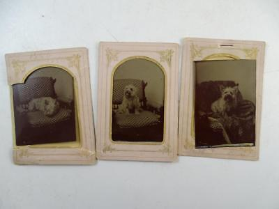 Antique Tintype Photograph Set Cairn Terrier Dog x3 Victorian 1870s Vintage Old
