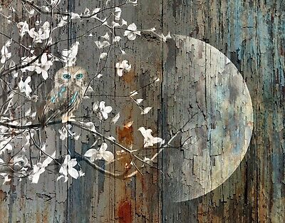 Rustic Owl On Tree Branch Moon Brown Blue Wall Art Home Decor Matted Picture
