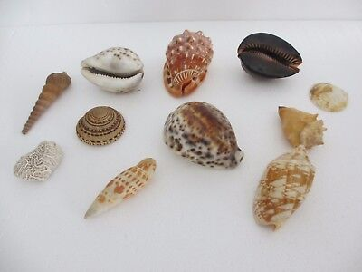 Xmas Gift 11 X Fine Collection Of Various Interesting Sea Shells