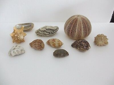 Xmas Gift 10 X Fine Collection Of Various Interesting Sea Shells