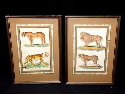 Magnificent Pair of G. Kearsley Antique Lion/Tiger/Leopard Colored Engravings