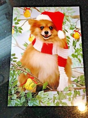 Pomeranian Christmas Card by Avanti w Envelope