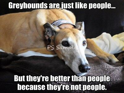 GREYHOUND Better Thank People Funny Magnet 3.5 x 3.5 inches