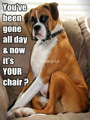 BOXER Chair Funny Magnet 4 x 3 inches