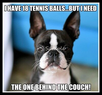 BOSTON TERRIER I Have 18 Tennis Balls Funny Magnet 3.5 x 2.5 inches