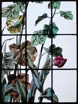 Beautiful Rare Painted French Floral & Foliage Antique Stained Glass Window