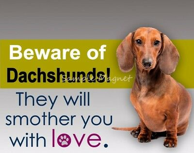 "DACHSHUND Smother You with Love Funny Fridge Magnet 4.75"" x  3.75"""