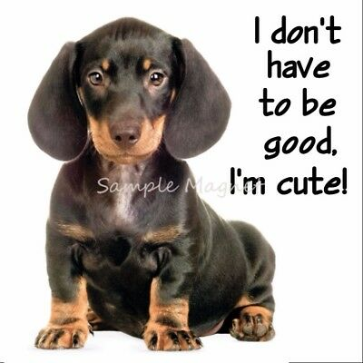 "DACHSHUND I Don't Have to be Good I'm Cute Funny Fridge Magnet 3.75"" x 3.75"""