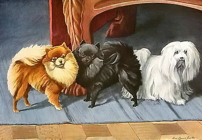 Old Antique Vintage Color Dog Art Print WHITE MALTESE TERRIER & POMERANIAN Dogs