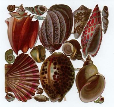 Victorian Die Cut Relief Scrap Sheet. Seashells #2131