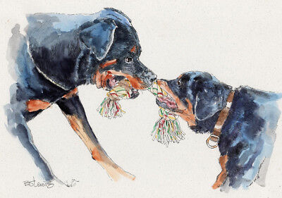 ROTTWEILER TUG O WAR Original Watercolor on Ink Print Matted 11x14 Ready 2 Frame