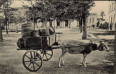 Portugal AZORES St. Michaels Sheep Car Schaaf Fuhrwerk Vintage Postcard ~1910
