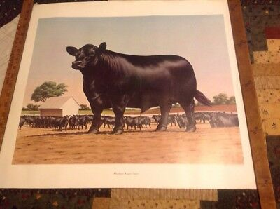 1961 American Angus Association Print,very good used cond.