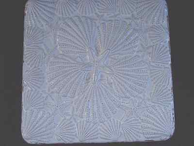 Rembrandtz White Washed Shell Trivet Handmade in Gallery St. Augustine