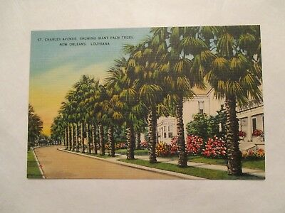 St Charles ave showing giant Palm trees New Orleans Louisiana LA Postcard