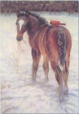 Xmas Cards BAY HORSE FOAL w/red bird Holiday Cards 10 per box