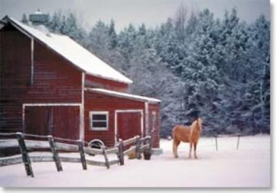 Xmas Cards HORSE & BARN Holiday Cards 10 per box