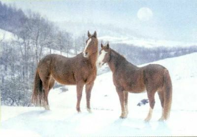 Xmas Cards Chestnut HORSES in Snowy Field Snow Scene Cards 10 per box