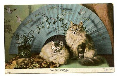 vintage cat postcard beautiful persian pair cats w big fan In Far Cathay 1900s