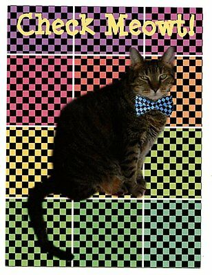 modern postcard adorable tabby cat w chequered bowtie Check Meowt! CAT CHARITY