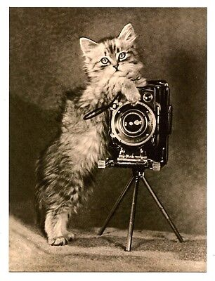 modern cat postcard adorable kitten photographer box brownie camera CAT CHARITY