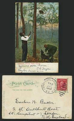 POSSUM HUNT Treed 1907 Old Colour Postcard Dog Hunters Hunting Hunter USA