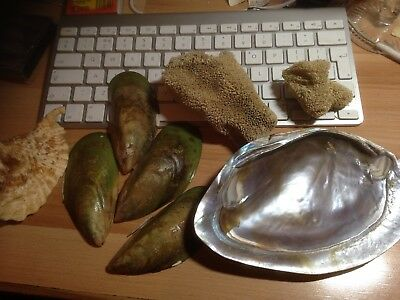 REDUCED! Lot of 6 sea shells, green mussel, mother of pearl, conch, sea plant