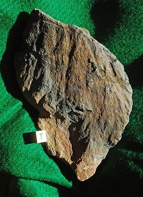 Shatter Cone IMPACTITE with Shock All Over, 724-gr. (1#, 9-oz.) Sudbury, Ontario
