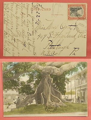 1912 Bahamas Postcard Cotton Silk Tree Post Office Postcard To Usa