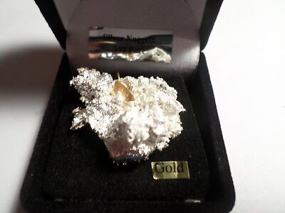 PURE NEVADA SILVER with/GOLD NUGGET. CRYSTALLINE NUGGET/SPLASH 19.6 Grams