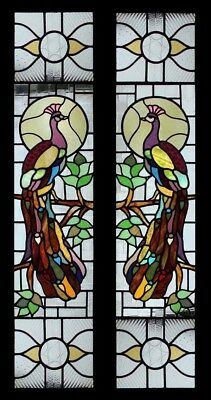 Very Rare & Beautiful Victorian English Peacocks Pair Stained Glass Windows