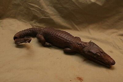 Antique Vintage Taxidermy Caiman Alligator Stuffed Reptile fr Repair Restoration