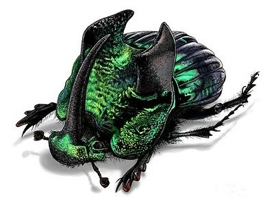 One Real Green Phanaeus Demon Male Horned Rhinoceros Dung Beetle Mounted Pinned