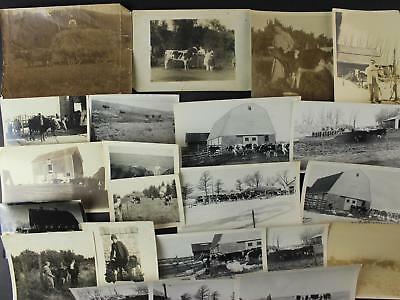 LOT: 22 1900-1940s GELATIN SILVER/SNAPSHOT PHOTOGRAPHS of FARM COWS~CATTLE~CALFS