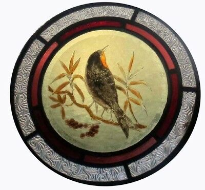Beautiful Rare Painted Bird In Foliage Victorian English Stained Glass Roundel