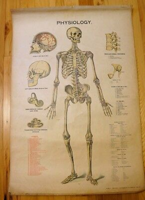 Antique 1898 The Caxton Co. Large Anatomy School Chart Skeleton Poster Medical