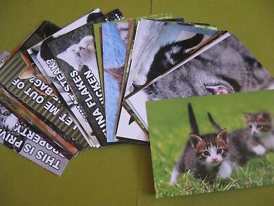 "lot of 40 cat postcards by postcardfair *NEW* high quality 4""x 6"""