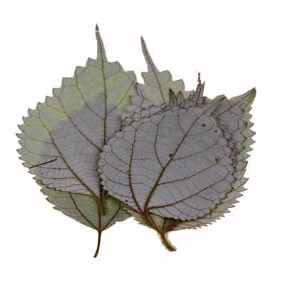 10 Pieces Dried Pressed Flowers for Crafts Natural Ramie Leaves for Diy Crafts