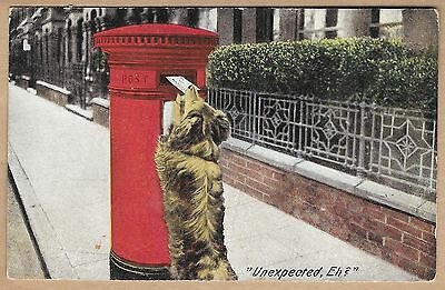 "Vintage Edwardian Postcard - Dog Posting a Letter - "" Unexpected, Eh ? """