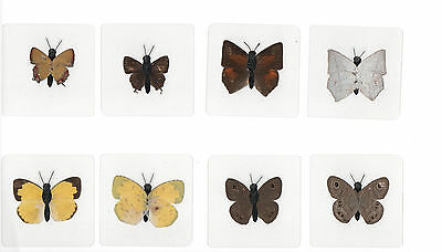 8 Laminated Real Butterfly Specimen Collection Set in 60x60 mm Sheet