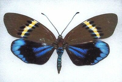 Lot Of 10 - Real Butterfly Blue Grn Eterusia Repleta Moth Unmounted Wings Closed