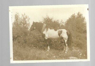 5x7  VINTAGE HORSE PHOTO #5 BLACK AND WHITE B/W UNKNOWN HORSES PHOTO #5