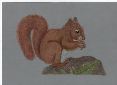 Hand drawn artwork Cute little red squirrel parchment craft picture