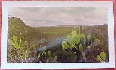 1940's Upcountry Cactus Territory of Hawaii Tinted